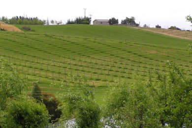 Horticultural and Vineyard