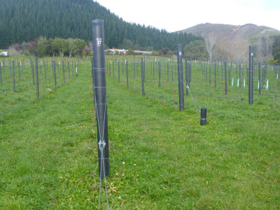 Higgins horticultural and vineyard fencing in Nelson Tasman